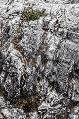 IMG_0327.jpg (KevinAirs) Tags: mist countryside moss australia textures boulders tasmania stony lichen rugged cradlemountain worldheritagearea tectures kevinairs442 ©kevinairswwwwordsandpixcom clairelakescradlemountainnationalpark