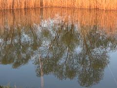 pond (germancute ***) Tags: tree nature germany landscape deutschland thüringen pond thuringia teich landschaft germancute