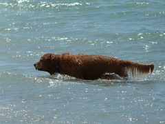 (IgorCamacho) Tags: dog praia beach water água bath funny diversão cachorro banho