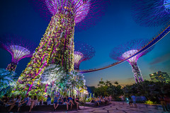 The Garden by the Bay, Singapore (absencesix) Tags: city longexposure nightphotography travel blue sunset people plants motion nature colors yellow architecture iso100 singapore asia southeastasia purple wideangle noflash busy nighttime april brightcolors portfolio 15mm locations locale marinabay 2015 bustling manualmode timeofday singaporesingapore 500px gardensbythebay geo:country=singapore exif:make=sony hasmetastyletag hascameratype adjectivesfeelingdescription haslenstype selfrating4stars camera:make=sony geo:city=singapore voigtlandersuperwideheliarasphericalii15mmf45 geostate exif:focallength=15mm exif:aperture=ƒ16 subjectdistanceunknown 50secatf16 mirrorlesscameras supertreegrove exif:isospeed=100 ilce7s sonyalphaa7s 2015travel camera:model=ilce7s exif:model=ilce7s april32015 australiasydneybrisbanemelbournesingaporekualalumpur0320201504062015 voigtlandersuperwideheilarasphericalii15mmf45 geo:lat=128215759 geo:location=gardensbythebay exif:lens=voigtlandersuperwideheliarasphericalii15mmf45 geo:lon=10386399873 1°1656n103°5150e