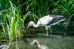 Gotcha (Jaap Mechielsen) Tags: de nordrheinwestfalen duitsland dierentuin kleve tiergartenkleve