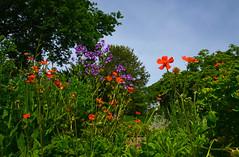 2148 Garten im grn 80 Park. Garden in the Green Park 80 (Fotomouse) Tags: flowers nature garden flickr natur blumen bume garten strucher fotomouse