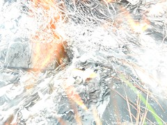 DSCN2514 (moisesbarcellos) Tags: life book power dancing flames books burn firedancing ember fier