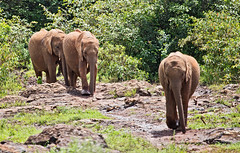 David Sheldrick Elephant Orphanage 9 (Grete Howard) Tags: safariinafrica safari whichsafaricompany bestsafaricompany calabashadventures travel holiday africa kenya elephants davidsheldrickwildlifetrust elephantorphanage wildelife animals nairobi