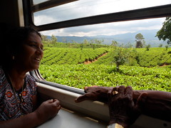 Fiona au Sri Lanka (infoglobalong) Tags: voyage culture international fiona asie enfants elephants srilanka animaux missions paysages moines amiti aide aimer programme maladies soutien animalier enseignement diffrence soins bouddhistes bnvole sympathie nourrir volontaire orphelinats globalong humanitariat
