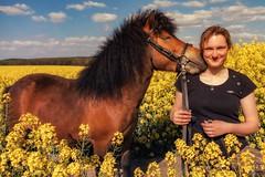 Kathleen und Paul (Michael Lumme) Tags: portrait horses horse feld pony shooting pferde raps pferd friesen acker rapsfeld friese rapsblte rapsknospe