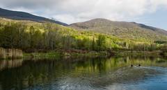 Greylock Glen (kmacgray) Tags: landscapes massachusetts portfolio 1224mmf4 portfoliolandscapes