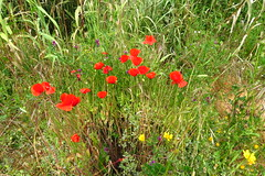 Nature's Bouquet (Deida 1) Tags: flora wildflowers naturesbouquet