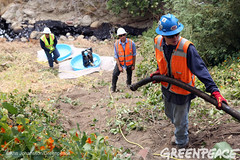 Getting to Spilled Oil In California (Greenpeace USA 2016) Tags: oil spill pipeline fossilfuel ventura california pollution cleanup crude ca usa
