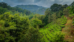 Munnar, Kerala, India (rosarioc62) Tags: munnar hill station india landscapes stream hills waterfalls bridge