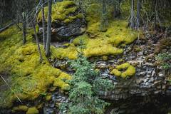MH5_9257 (memories by Mark) Tags: rockies alberta banff rockymountains banffnationalpark johnstoncanyon