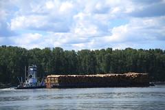 Bernert Barge Lines Mary B (Chuck Stephens) Tags: columbiariver tugboat tug tugs tugboats maryb vancouverwashington frenchmansbar workboats bernertbargelines theothervancouver 367315830 wdd9748 columbiarivertugs