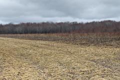 Awaiting Green (Boganeer) Tags: canada nature field canon landscape spring newbrunswick maritime nouveaubrunswick canoneos maritimes atlanticcanada canon600d canoneos600d canont3i canonrebelt3i