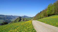 Hinter Beibelberg, 23.4.15 (ritsch48) Tags: kantonsolothurn naturparkthal hinterbeibelberg ramiswilmümliswil