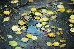 Из осеннего, окт 2013  [KODAK PORTRA 160 canon EOS-1 135/2] (Towy-Yowy) Tags: color kodak crime portra ektar крым