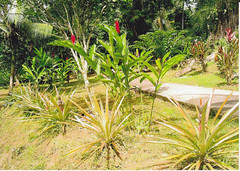 Hotel El Pizote Lodge - Jardines