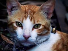 Don't cry kitty (roizroiz) Tags: portrait pets love cat kitty felinos cry catportrait i500
