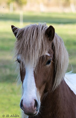 Horse (sharken14) Tags: horse nikon hage hst roslagen hsthuvud islnning