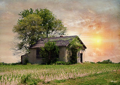 Illinois Abandonment (MEaves) Tags: abandoned forgotten home house trees midwest illinois toned textured
