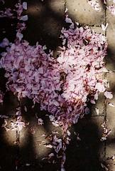 Flower heart (m.sukhanenko) Tags: shadow love film iso200 petals heart ground olympus romance analogue zuiko inlove sunray olympusom2sp flowerheart fujifilmsuperia om2sp zuikof1850mm