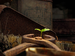 Old & New (Tim Truyens) Tags: urban plant abandoned nature up close farm tools