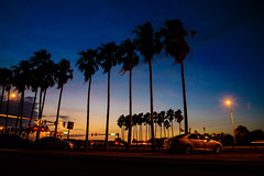 Tampa at Night (Emily Kistler) Tags: road longexposure bridge sky cars water silhouette night tampa landscape outdoors evening bay nikon florida palmtrees d750 intersection lighttrails bluehour clearwater courtneycampbellcauseway