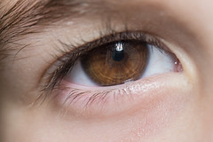 Brown Eyed Girl (Scott Michaels) Tags: macro nikon kirk d600 nikon105mmvr sc28 macrobracket sb700