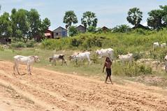 lac tonle sap - cambodge 2014 5 (La-Thailande-et-l-Asie) Tags: cambodge lac tonlsap