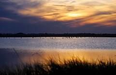 Birdland   part II (gio_running_away_from_Flick) Tags: sunset sky sun heron nature clouds tramonto nuvole quiet wind sofia saline aironi saltplans
