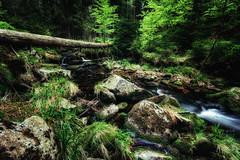 Dunkle Wlder (Gruenewiese86) Tags: green creek forest germany landscape deutschland natur bode landschaft wald wandern harz 2016 waldboden braunlage wlder waldlandschaft forestscape waldlandschaften bodefall ohenze
