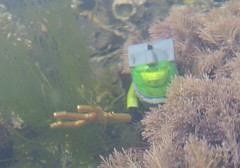 Lego diver exploring sea bed (Sentinel 3001) Tags: sea toy bed lego mini atlantis figure diver