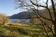 Loch Chon, Trossachs (Paul Emma) Tags: uk scotland goat trossachs aberfoyle lochchon wildgoat