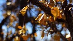 Azul e Amarelo (Andr Felipe Carvalho) Tags: azul bokeh amarelo cerrado queimada