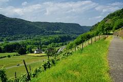 20160526-144054 (lichtschattenjaeger) Tags: rheinlandpfalz rhein leutesdorf hammerstein rheinsteig wein weinstock weinanbau schtzenweg