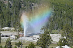 Beehive Geyser, Yellowstone (David A's Photos) Tags: rainbow yellowstonenationalpark geyser beehive yellowstonetrip june2016