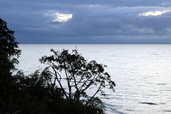someone to watch over you (kexi) Tags: clouds horizon tree sea water balticsea evening silver blue landscape jastrzbiagra pomorze pomerania polska poland canon june 2015 instantfave