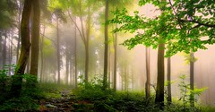 The sun will win! (ramerk_de) Tags: hdr bavarianforest sun fog upperpalatinate bavaria ngc npc ~themagicofcolours~viii