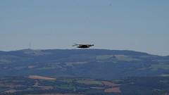 La puncho d'agast - Millau (12) (FGuillou) Tags: france montagne pentax bleu ciel 12 francia oiseau millau sauvage aveyron aigle rapace k50 puncho pech vautour agast