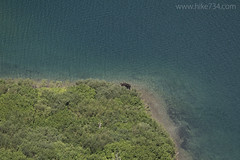 "Moose at head of Gunsight Lake • <a style=""font-size:0.8em;"" href=""http://www.flickr.com/photos/63501323@N07/28481062982/"" target=""_blank"">View on Flickr</a>"