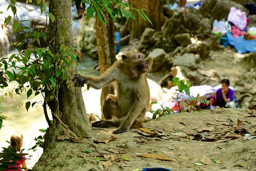 Monkey at Erawan waterfall in Kanchanaburi province, Thailand