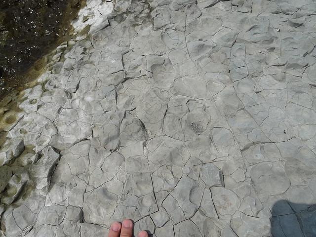 頭前溪化石19