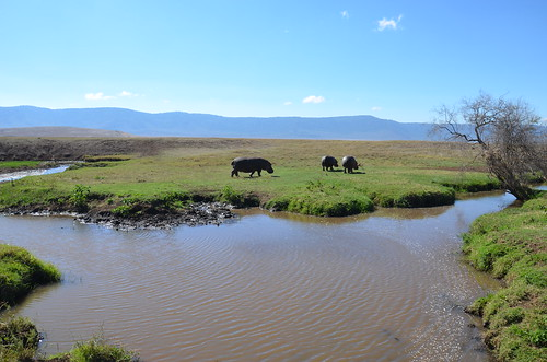 Famo on the move, Ngorongoro Crater, Tanzania