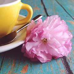 Happy Wednesday (life stories photography) Tags: pink stilllife white flower cup yellow square spring teal blossoms spoon squareformat april teacup iphone cupandsaucer 2015 iphoneography instagramapp uploaded:by=instagram