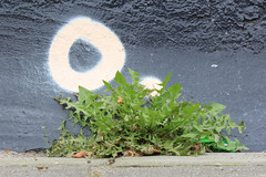 nanogarden2 (O.) (kleuske) Tags: wall concrete weed o thinking enschede realisation dadelion nanogarden kleuske