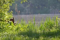 DSC_0219 (Linguaprof) Tags: sighisoara brasso tgmures rastolita targumures szentharomsag segesvar nagyszeben muntiifagaras marosvasarhely fogarasihavasok ratosnya nyaradmente raulmures dicsszentmrton segesvarivar jodvolgye marosvolgye kknyes