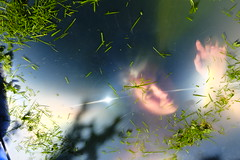 Under The Influence Of Grass (eddi_monsoon) Tags: portrait selfportrait self fresnel 365 fresnellens selfie threesixtyfive