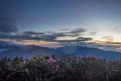 -2 (billlushana1) Tags: travel cloud mountain flower tree sony taiwan hike peaks  taroko tw  tarokonationalpark hehuanshan    mountain 100peaksoftaiwan taiwantop100peaks sonya7r