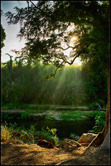 River Side (alvinpurexphotography) Tags: nature sunrise canon landscape riverside ngc sunrays