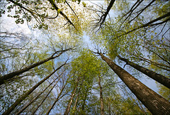 """~^ Reaching out for that Spring feeling ^~ (Darrell Colby """" You Call The Shots """") Tags: ontario tree forest spring feeling londonontario"""