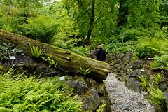 Mai Botanik - 2016-0014_Web (berni.radke) Tags: may growth mai botany botanicalgarden mnster botanik botanischergarten wachstum